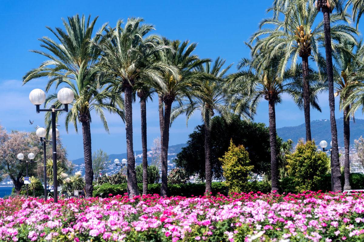 En harmonie avec la nature, profitez de Cannes et de ses jardins remarquables